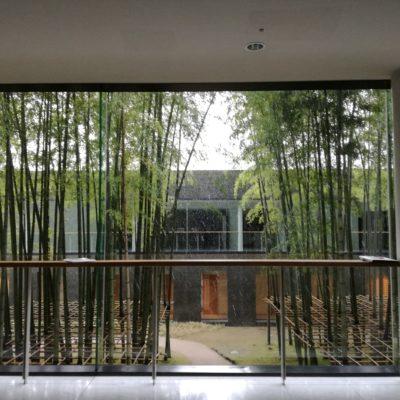 大ホールロビーから見える中庭。青々とした沢山の竹が真っ直ぐに伸びて美しい。