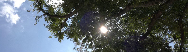 打ち合わせ前、上野公園。青空と木の間から見えた太陽。