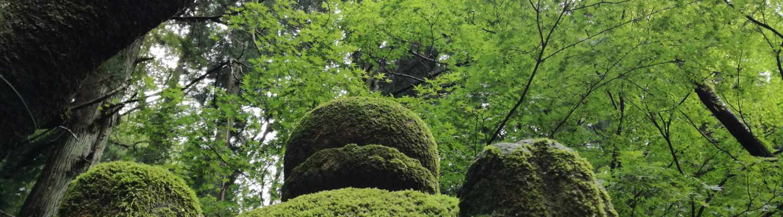 苔生す灯籠 Lantern is moss-covered.