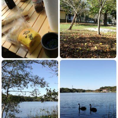 水辺には二羽の白鳥(?)朝の様子