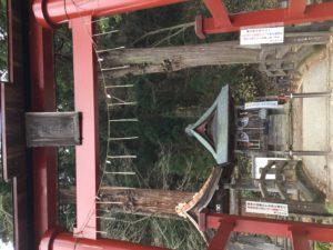 厳島神社、弁天様に会えるとは!