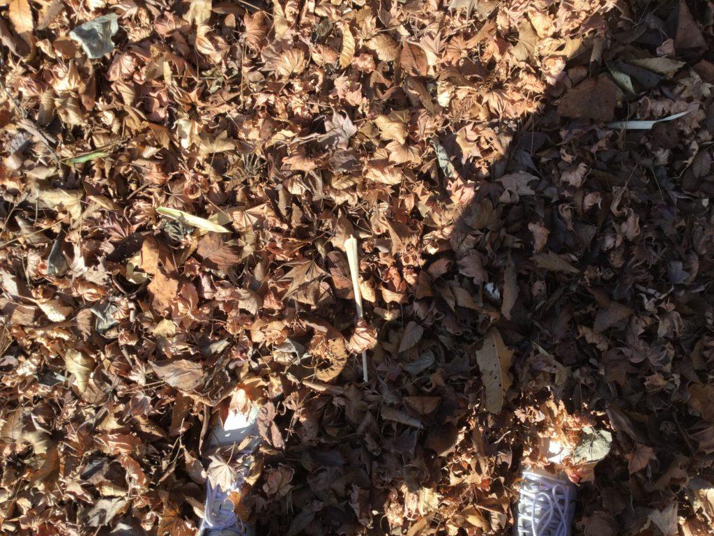 靴が丸々埋まるほどの落ち葉